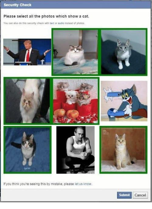 Captcha: Deep Learning sammelt Bilder mit Bestätigungen, welche Katzen sind